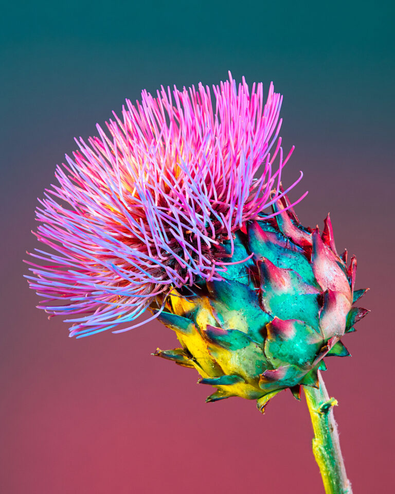 Bright, Saturated Color Cloaks Houseplants and Flowers in Kaleidoscopic Photographs