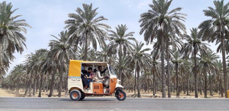 In Pakistan's largest date producing region, Middle Eastern varieties bear fruit